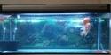 Boyu Glass Aquarium Ea 120e