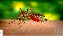 Zika An Alarming Caution Treatment