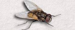 House Fly Control Solutions
