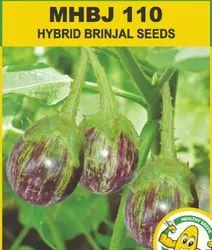 Brinjal Hybrid