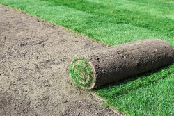 Green Satcap India Natural Grass, For Lawn