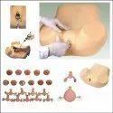 Advanced Gynecological Training Simulator