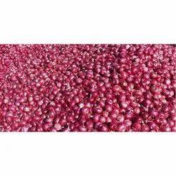 Red Onion in Tiruchirappalli - Latest Price & Mandi Rates from