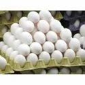 Pulp Egg Tray