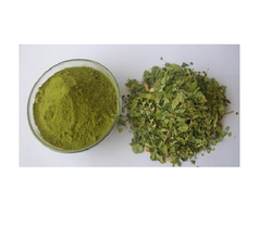 Medicinal Herbs - Green Tea 100% Export Oriented Unit from