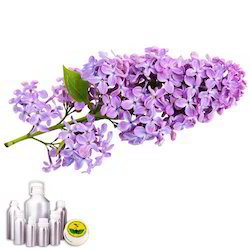 Lavender Oil Kashmiri