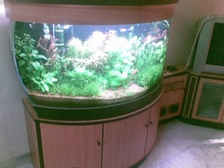 Bow Front Glass Tank 3ft