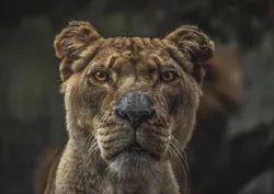 Tanzania Safari Tour Package