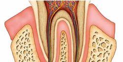 Endodontics Certification