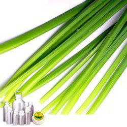 Citronella Oil Certified Organic