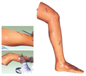 Advanced Surgical Suture Leg Models
