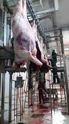 Halal Slaughtered Buffalo Meat
