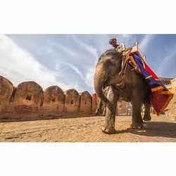 Jaipur Elephant Ride Tour Package