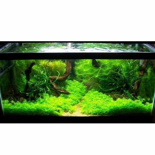 Planted Nature Aquarium