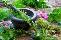 Ayurvedic & Herbal PCD Pharma in Nagaland