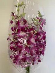 Flower Purple Orchids