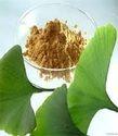 Ginkgo Biloba Extract Powder