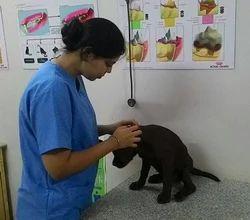 Pet Treatment Service