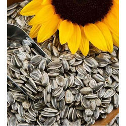 Sunflower Seed, Pack Size: 50 Kg