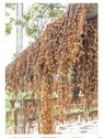 Dried Jasmine Flower