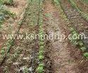 Drip Irrigations