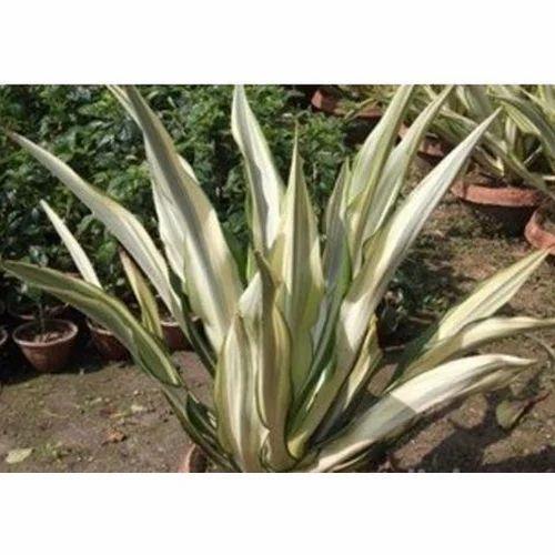 Garden Plant Nursery Service