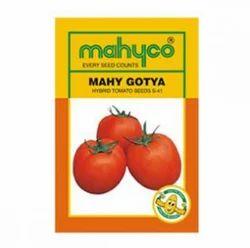 S 41 Gotya Tomato Hybrid