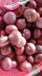 B Grade Maharashtra Onions, Packaging Size: 50 Kg, Onion Size Available: Medium