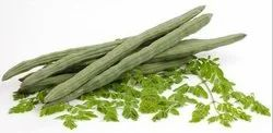 Green Gujarat Fresh Drum Stick
