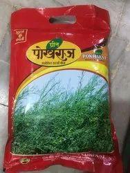 Black Mustard Pokhraj (Rayda)