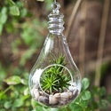 Glass Bulbs Terrarium