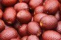 Aguaje Fruit Extract