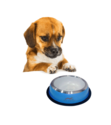 Pets Empire Pawzone Heavy Silicon Base Steel Dog Bowl