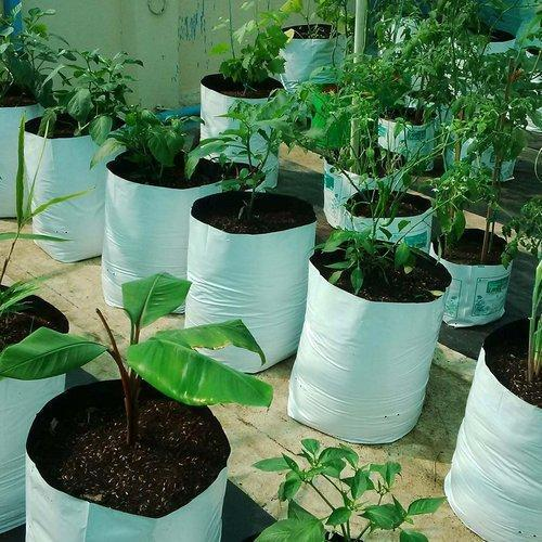 Cylinder Agricultural Grow Bag, Size: 40x24x24 Cm And 35x20x20 Cm And 30x16x16 Cm, Rs 160 /kilogram   ID: 19408836262