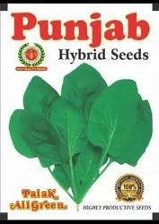 spinach all green seeds sadabahar