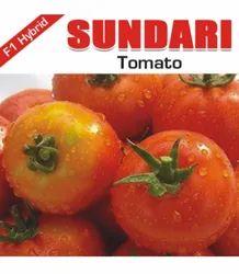 Samriddhi Sundari Tomato Seeds