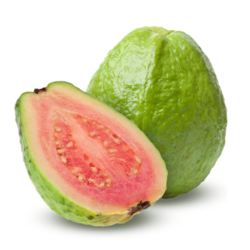 Guava Cold Storage Rental Services