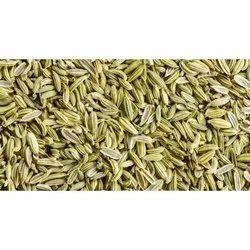 1 Year Green Fennel Seeds, Packaging Type: Bag, Packaging Size: 5 kg