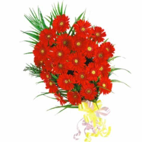 25 Red Gerbera फ ल क ग च छ फ ल वर ब च La Needs Ltd Lucknow Id 17729435173