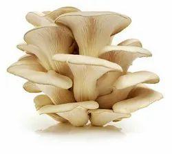 Oyster Mushroom in Guwahati - Latest Price & Mandi Rates