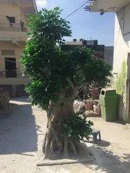 Artificial Ficus Microcarpa  Tree