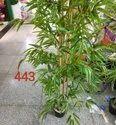 Plastic Green Muhil Artificial Tree