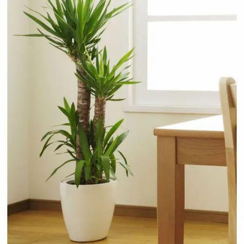 artificial-indoor-plants-500x500.jpg (500×500)