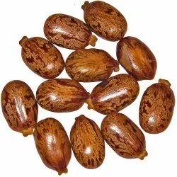 Matras Exporters Castor Oil Seeds, Carton Box, Pp Bag, Pack Size: 100 Kg