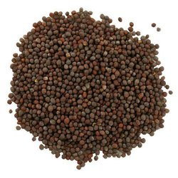 Black Mustard Seeds, Packaging Type: Gunny Bag