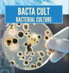 Bactria For STP Commissioning