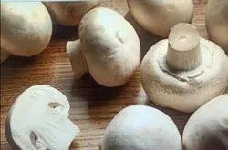 Veg Mushroom