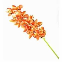 Orange Cymbidium Stick