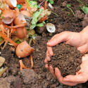Microbe To Convert Solid Wastes To Manure