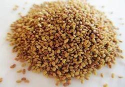 ROYAL Alfalfa Grass seed, for FEED